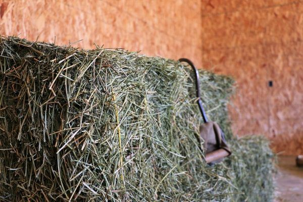 Block of hay with hay hook in it